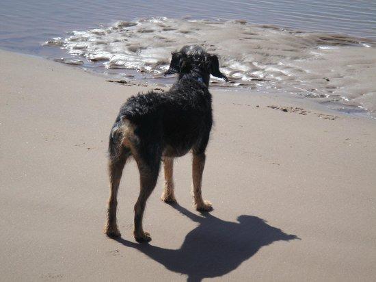 St. Bees Beach: dodge