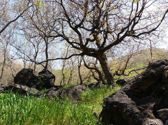 Kasbah Du Toubkal : Steineichen