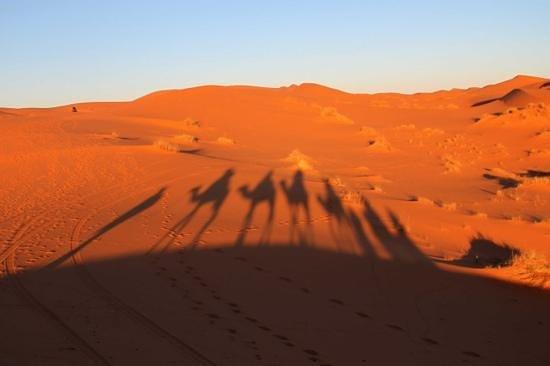 Atlas and Sahara Day Tours : Camel trekking in the Sahara