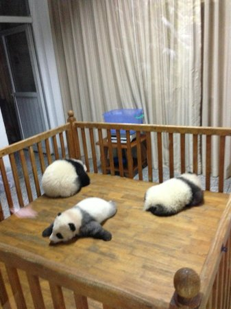Giant Panda Breeding Research Base (Xiongmao Jidi): So adorable!