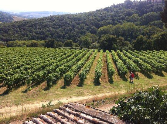 Il Borghetto di San Gimignano Agriturismo : View from Capanna Di Sotto