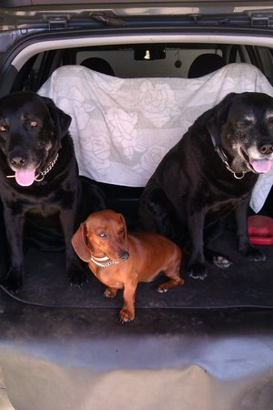Lex, Chelsea and Diesel - the security team at Peace Valley Guesthouse
