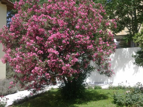 Byzantine & Christian Museum : Цветущий куст во дворе музея