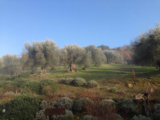 Il Cantico della Natura: Panorama
