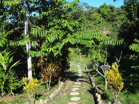 Farm of Life (Finca de Vida): The beautiful path's at the farm