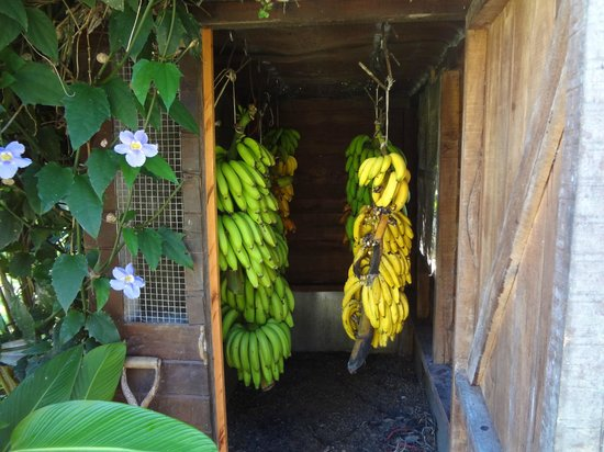 Farm of Life (Finca de Vida): The Banana Villa, you have to try the 'apple banana's'