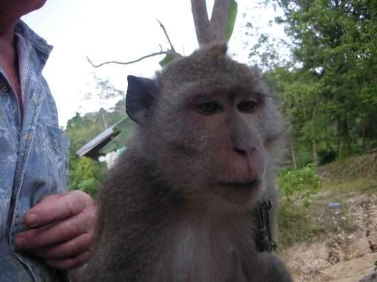 Treetop Tour Cable Ride: treetoptour monkey