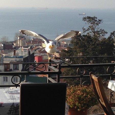 Ada Hotel Istanbul: Скандальная чайка