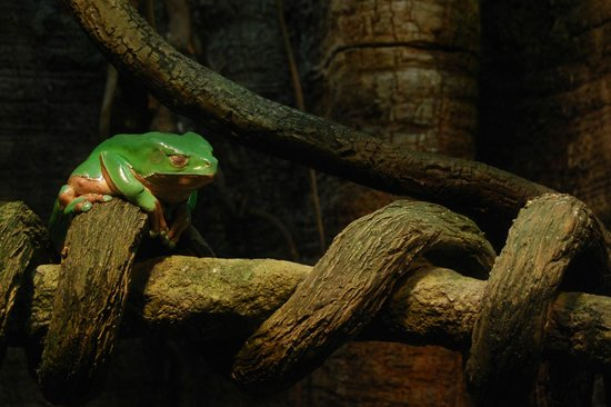 National Aquarium : A sleepy frog.