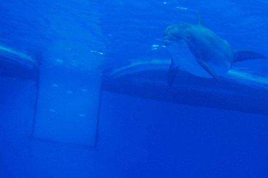 National Aquarium : Underwater dolphin viewing area.