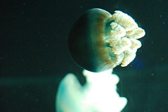 National Aquarium : Thousands of jellies.