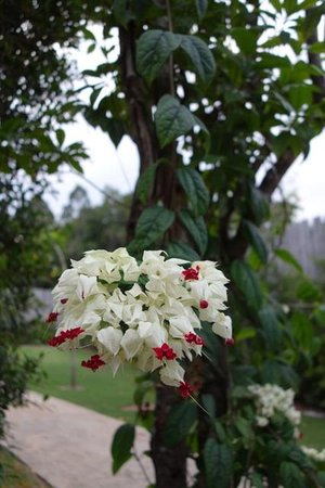 Perennial Resort: 敷地内は花が咲き乱れメルヘンチック