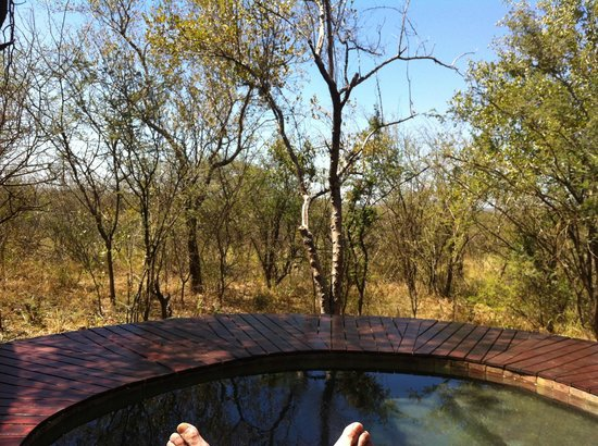 Madikwe Hills Private Game Lodge: View from Pool