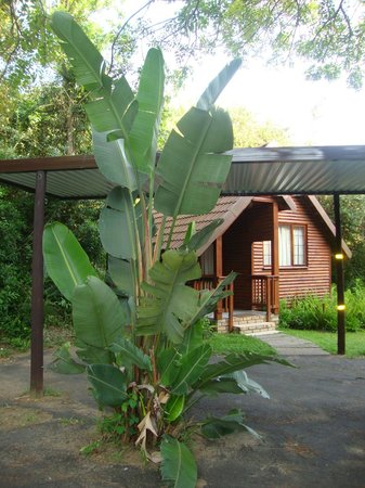 Imvubu Lodge: Мой номер (домик)