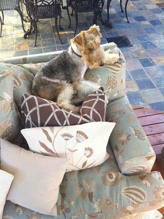 Kanonkop Guest House: Resident dogs