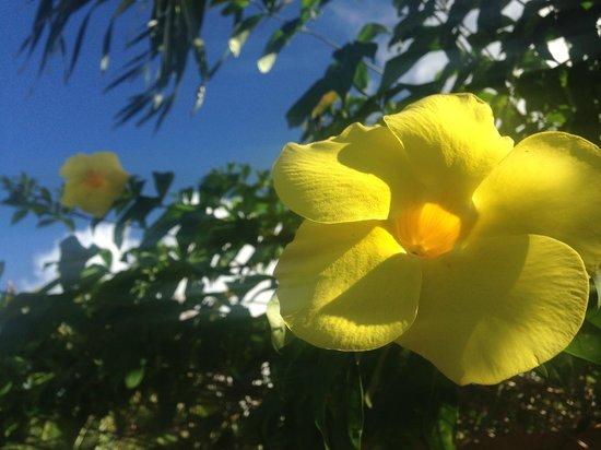 Legend Garden Condos: Flowers on the premises.