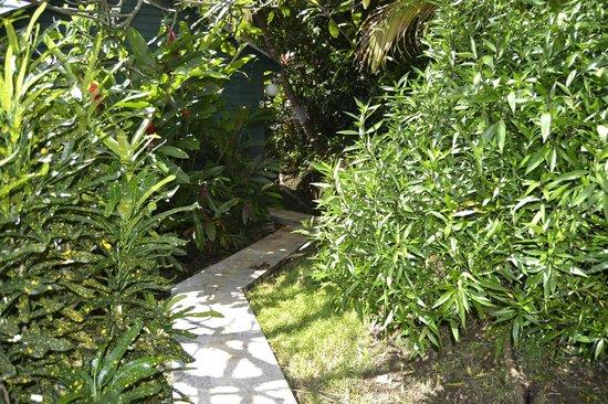 An Eol Caraibes: allée cocotier
