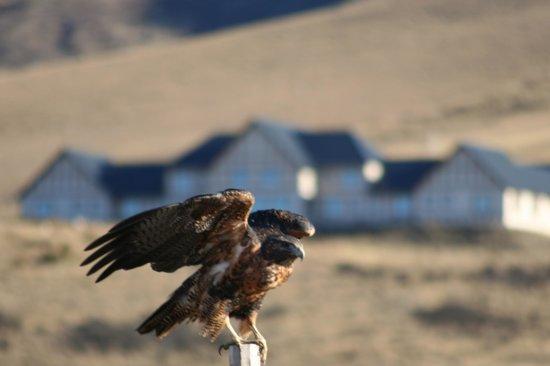 EOLO - Patagonia's Spirit: Eagle