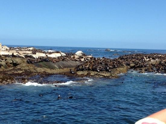 Seal Point: Seal Colony