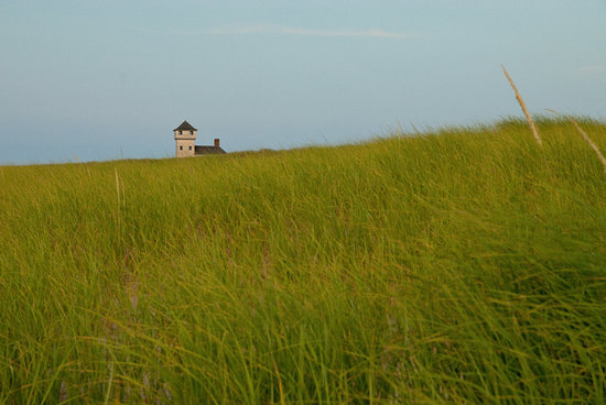 A Little Inn on Pleasant Bay : Dune Grass