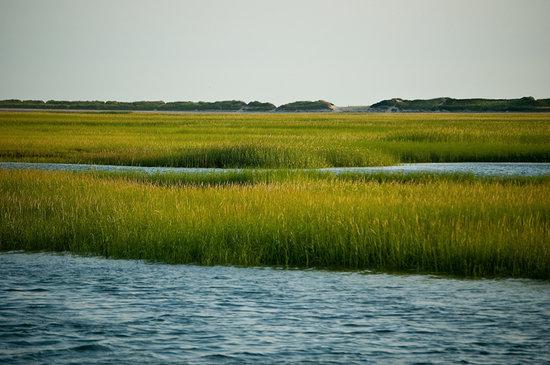 A Little Inn on Pleasant Bay : The Marsh