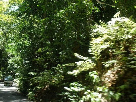 Touring Fern Gully Park