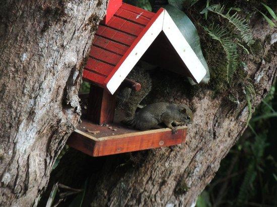 Pousada Campos dos Holandeses: Esquilo
