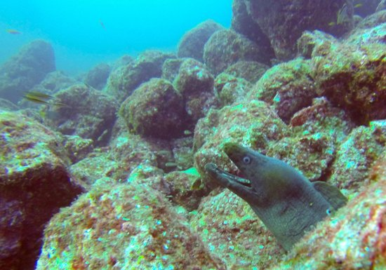Panama Dive Center: Morray's than you'll ever see anywhere..!