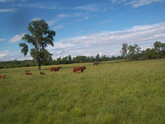 D & K Ranch: some trails cut through cattle pastures