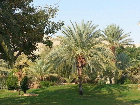 Kalia Kibbutz : The hotel grounds