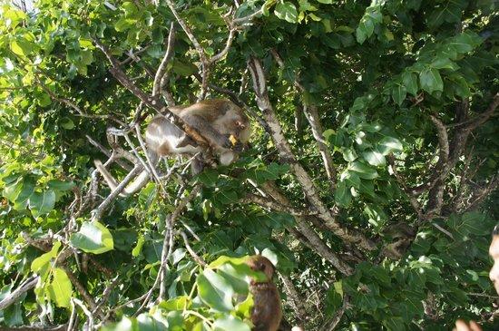 Siam Adventure World - Private Tours: Monkeys!