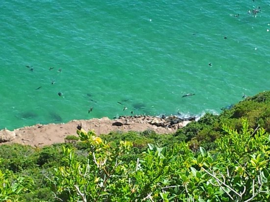 Robberg Nature Reserve: Cape fur seal colony (plug your nose!)