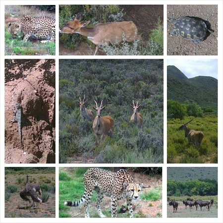 African Game Lodge: Animals