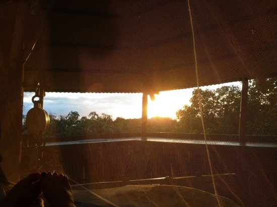 Tropical Treehouse : View from the bed at the Buddah Hooch 1/18/14
