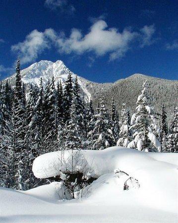 White N' Wild Snowmobile Tours: Beautiful winter scenery as seen on your snowmobile tour