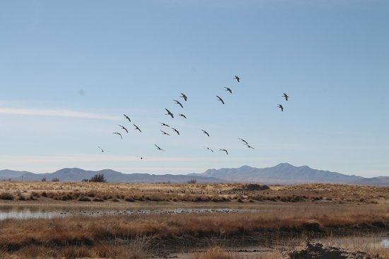 Willcox Playa Wildlife Area: Cranes and ducks near Cochise Lake