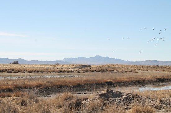 Willcox Playa Wildlife Area: Cranes near Cochise Lake