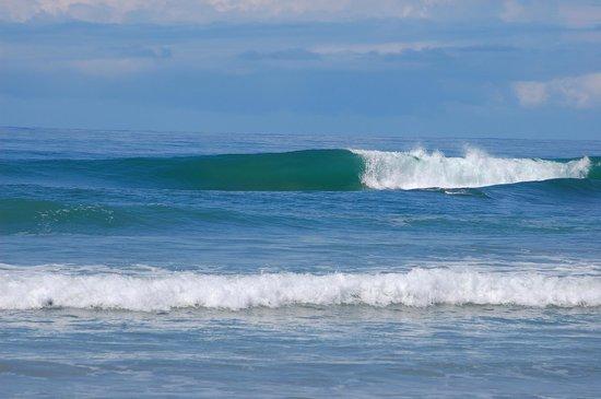 Makanas: surf