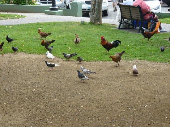 Emancipation Garden : birds