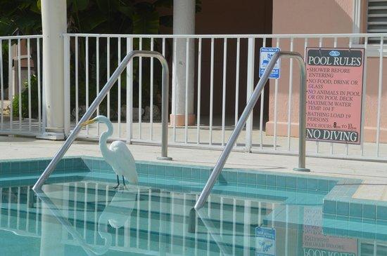 Chesapeake Beach Resort: love this! The rules say no animals:)
