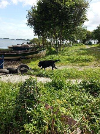 Forest Hill B&B: El perro de Dolores, un bonito labrador negro muy amigable