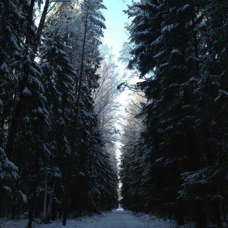 Pawlowsk-Palast und Parkanlage: Завораживает