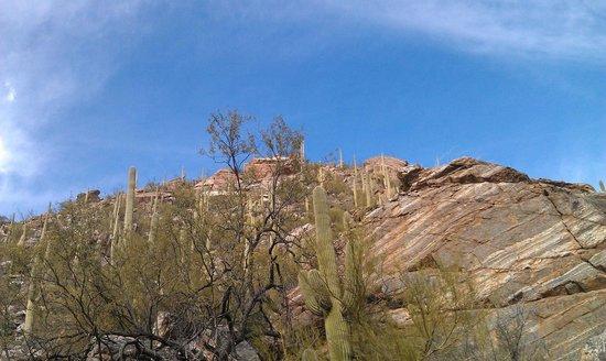 Sabino Canyon: Canyon wall