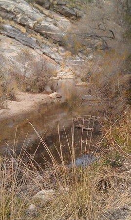 Sabino Canyon: Stop 8