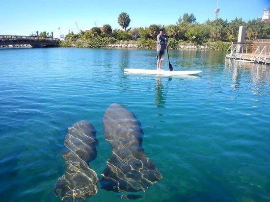 Island Park Sarasota Fl