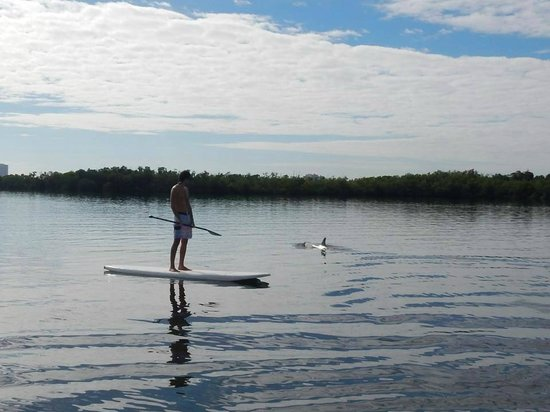 South Florida Paddle: Dolphin on Singer Island tour