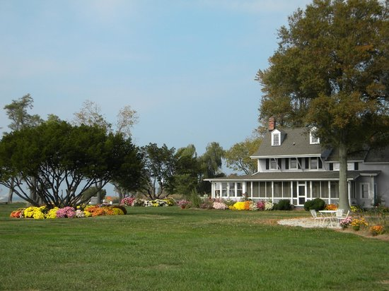 Black Walnut Point Inn : Our many mums help feed thousands of monarchs during their fall migration.