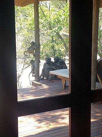 Imbali Safari Lodge : Our deck