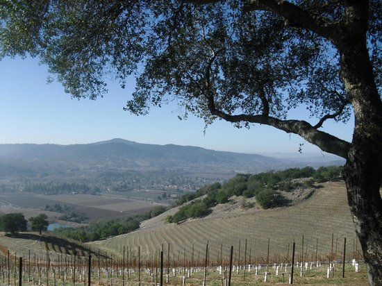 Kunde Family Winery : View from the mountain