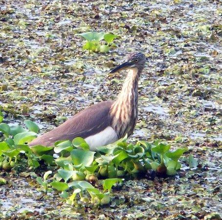 Kait's Home: Backwater birds